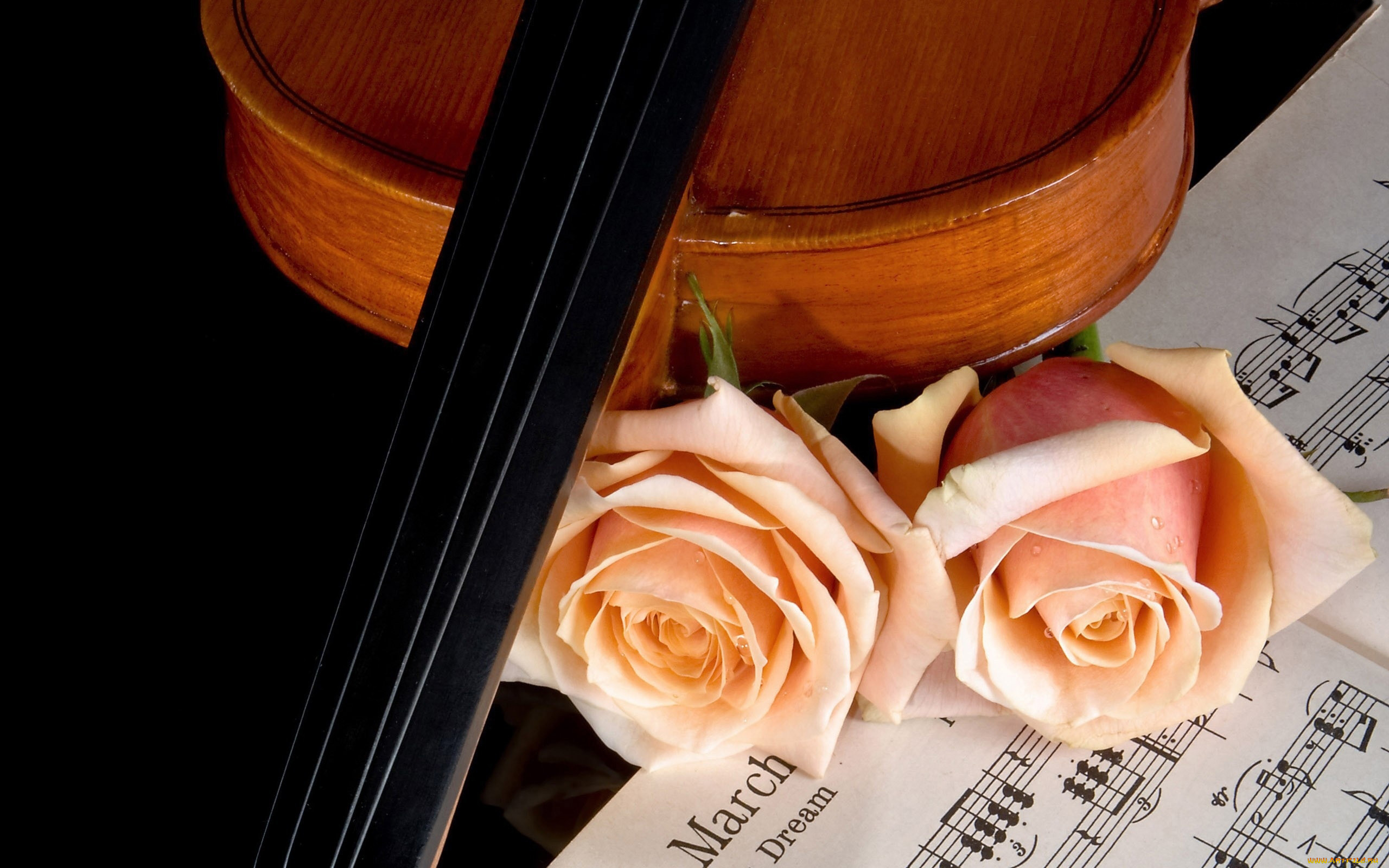 встречается фото скрипки с нотами впечатление что своем